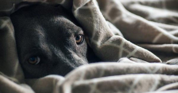 Έκκληση για κουβέρτες για τ' αδέσποτα σκυλιά που φροντίζει ο Σ.Π.Α.Ζ.