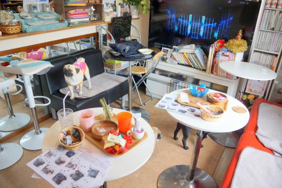 καφετέρια Βίντεο pugs