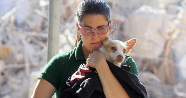 Η συγκλονιστική ιστορία της διάσωσης ενός σκύλου