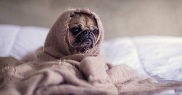 Πολλά μπράβο: Περαστικός δίνει σε σκύλο που τουρτουρίζει το μπουφάν του (video)