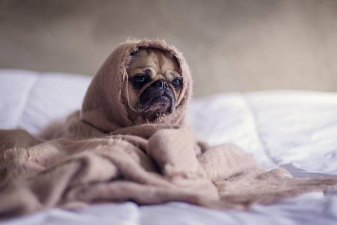 φροντίδα αδέσποτων Σκύλος Βίντεο Αδέσποτα