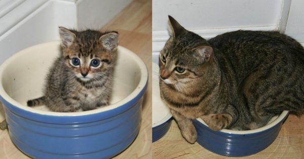 25 γάτες τότε και τώρα