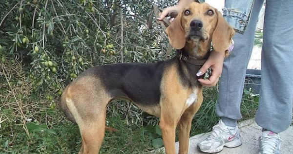 Καταδικάστηκε ο άνδρας που κακοποιούσε και βασάνιζε τη σκυλίτσα του για να την κάνει κυνηγόσκυλο