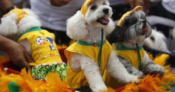 Τα σκυλιά των… Αποκριών! Τα ντύνεται, τους αρέσει;