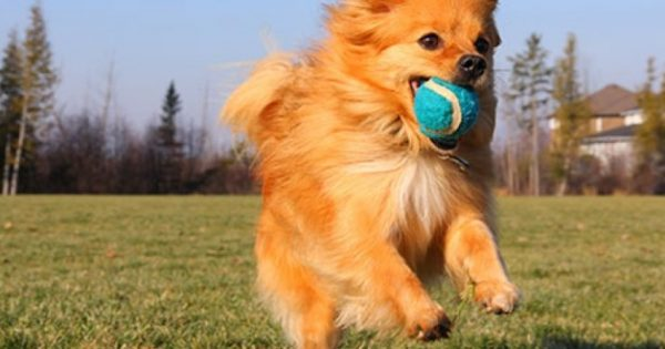 Μάθε στο σκύλο να φέρνει το μπαλάκι