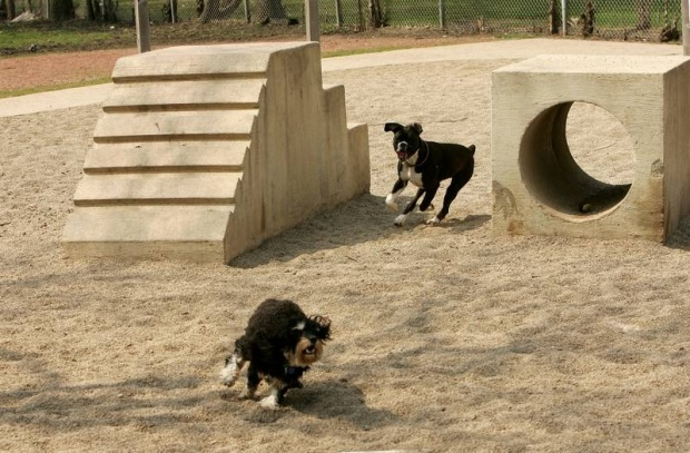 Σκύλος Πάρκο για σκύλους Ίλιον