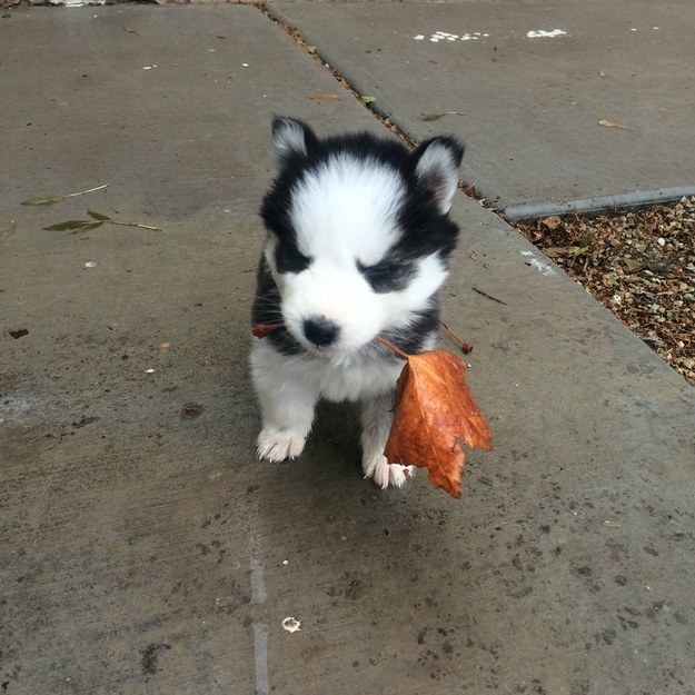 υιοθεσία σκύλων κουτάβια
