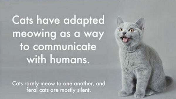 συμβουλές Γάτα