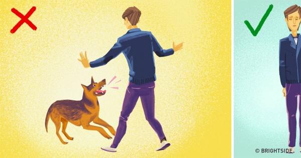 Τι να κάνετε σε περίπτωση που σας επιτεθεί ένας αδέσποτος σκύλος