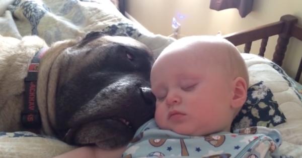 Μόλις το μωρό ξάπλωσε δίπλα στον σκύλο, η μαμά άρπαξε αμέσως την κάμερα. Αυτό που κατέγραψε; Θα σας φτιάξει τη διάθεση!