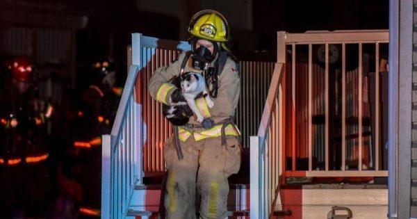 Γάτα δάγκωσε την ιδιοκτήτριά της την ώρα που κοιμόταν για να της δείξει ότι το σπίτι είχε πάρει φωτιά, σώζοντας τις ζωές 4 ανθρώπων