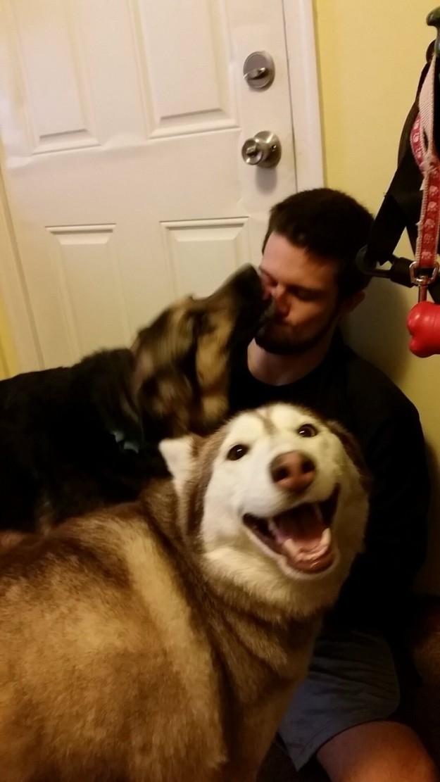 Σκύλος σκυλάκια αφεντικό