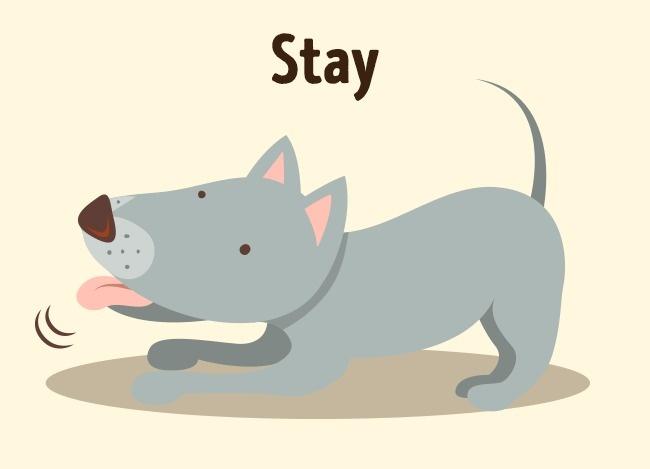 Σκύλος εκπαίδευση σκύλου εκπαίδευση