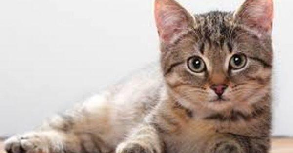 ΤΡΕΛΟ ΓΕΛΙΟ: Δείτε τη γάτα που βλέπει θρίλερ και έχει ΤΡΕΛΑΝΕΙ όλο το διαδίκτυο