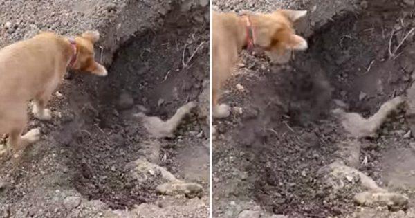 Θα ΔΑΚΡΥΣΕΤΕ.. Σκύλος θάβει στο Χώμα το Άψυχο Κορμί του Καλύτερού του Φίλου, που Χτυπήθηκε από Αυτοκίνητο