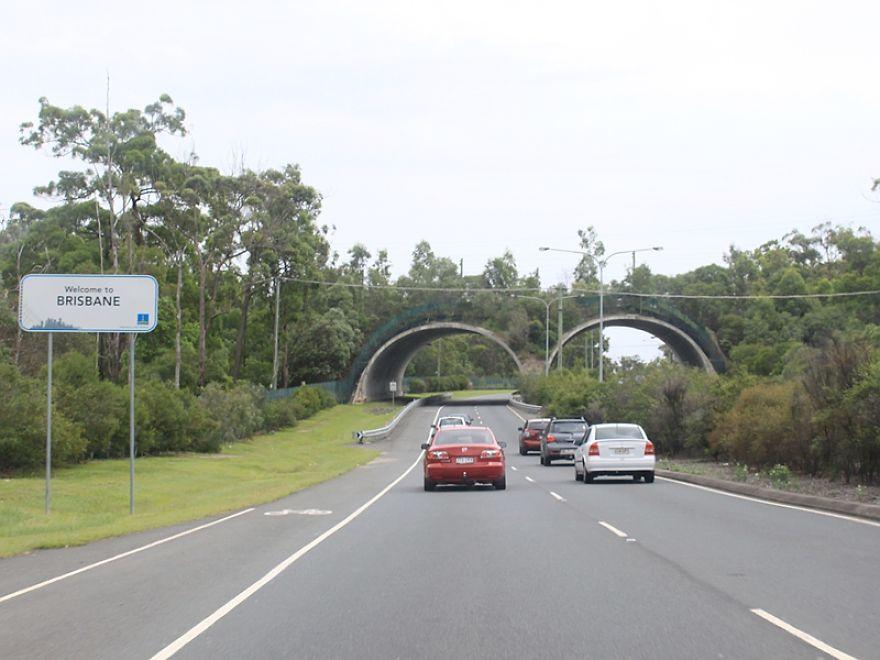 ζώα γέφυρες