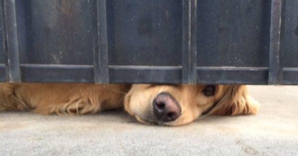 Κάθε μεσημέρι, αυτός ο σκύλος βάζει τη μουσούδα του κάτω από τον φράχτη και περιμένει. Ο λόγος; Κάνει τον γύρο του διαδικτύου!