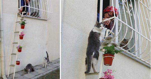 Γυναίκα έφτιαξε μια σκάλα για αδέσποτες γάτες για να μπαίνουν στο σπίτι της όταν κρυώνουν