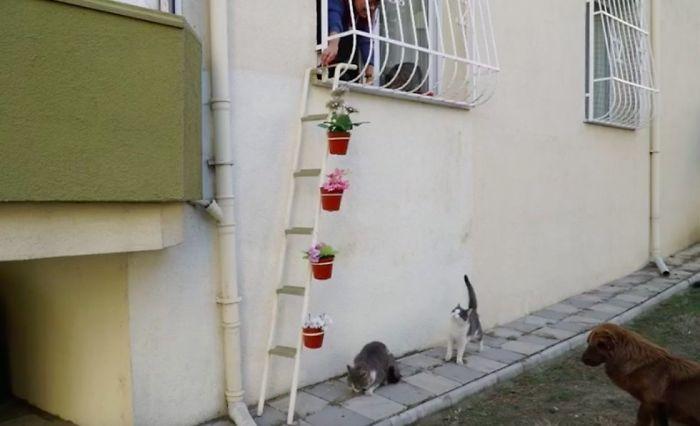 γάτες αδέσποτες γάτες