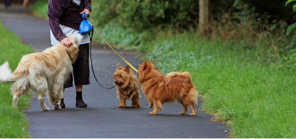 Σκύλος άσκηση