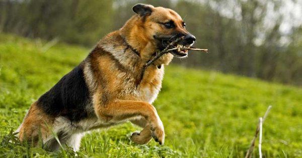Είναι πολύ επικίνδυνο να χρησιμοποιείτε ξύλα όταν παίζετε με τον σκύλο σας