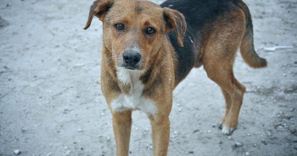 5 λόγοι για να υιοθετήσεις ενήλικο σκύλο από καταφύγιο ζώων