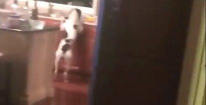 Ο σκύλος πιάστηκε στα πράσα