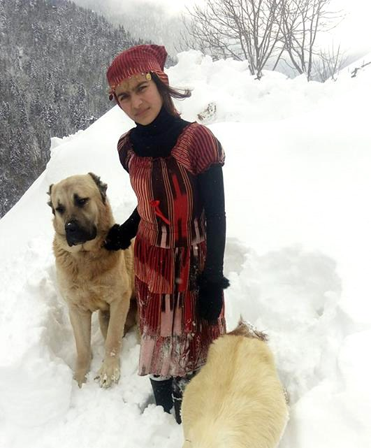 Σκύλος κατσίκα διάσωση σκύλου
