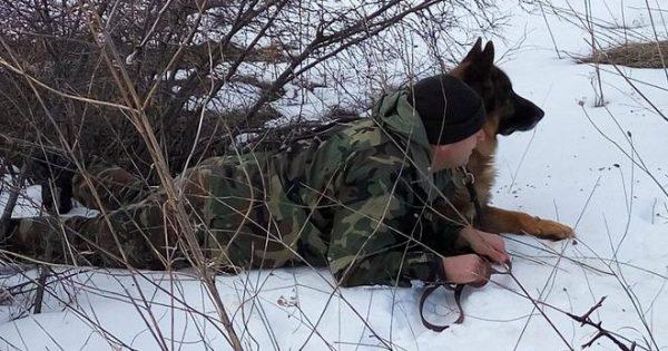 Τα σκυλιά-φύλακες της πατρίδας μας – Οι ασκήσεις τους στο χιόνι και το κρύο (εικόνες)