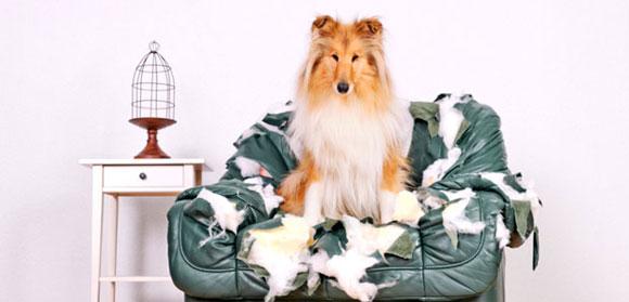 Σκύλος και άγχος αποχωρισμού