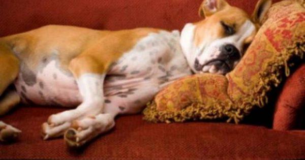 Oι σκύλοι ονειρεύονται τους ανθρώπους που αγαπούν!