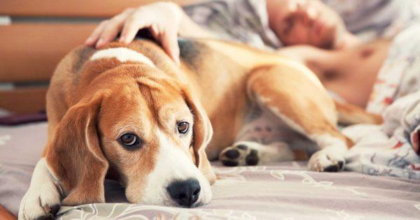 Να τι δεν πρέπει να κάνεις ποτέ μπροστά στον σκύλο σου