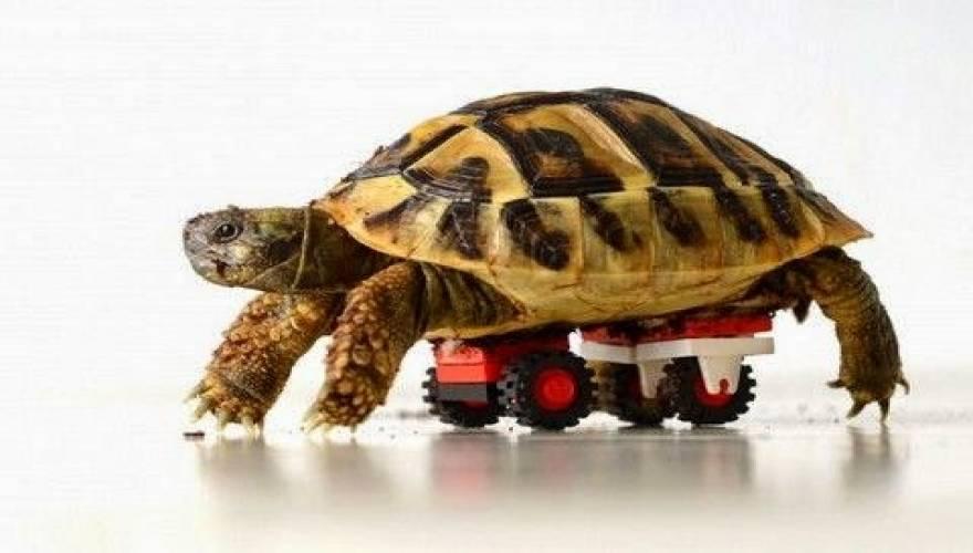 χελώνα Βίντεο