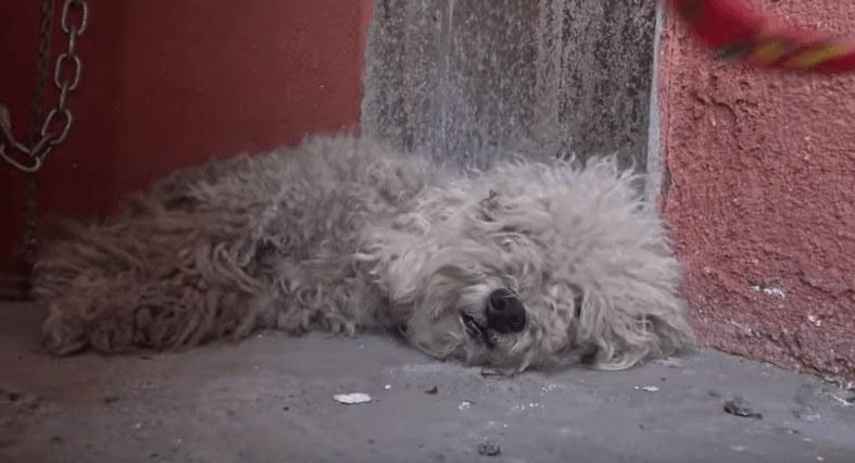 αυτισμός αδέσποτο σκυλί αγόρι