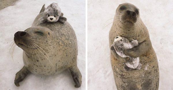 Φώκια βρήκε παιχνίδι που της μοιάζει και δεν μπορεί να σταματήσει να το αγκαλιάζει