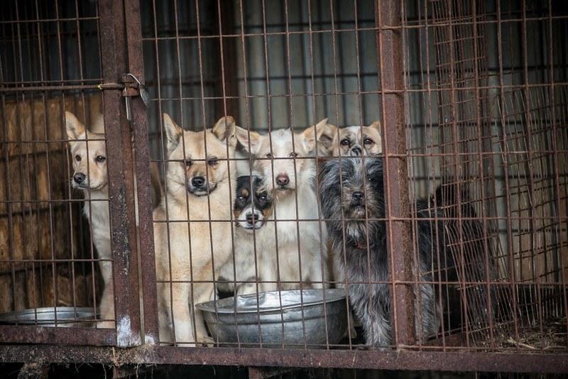 σκυλίτσα κακοποίηση σκύλων έγκυος