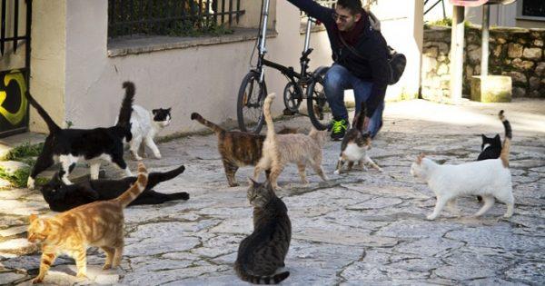 Οι γάτες της Αθήνας μέσα από τον φακό μιας τουρίστριας!