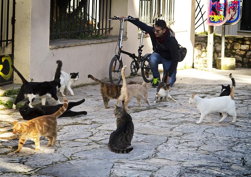 Τουρίστρια γάτες Αθήνα