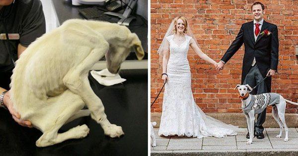 Σκύλος που ζύγιζε μόλις 3 κιλά όταν διασώθηκε, αναρρώνει και συνοδεύει την ιδιοκτήτρια του στον γάμο της!