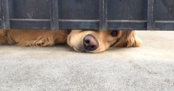 Αυτός ο σκύλος περιμένει καθημερινά μια φίλη του που γυρνάει από το σχολείο να τον χαϊδέψει
