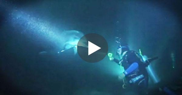 Δύτες βλέπουν ένα δελφίνι να έρχεται κατά πάνω τους. Μόλις τους πλησίασε λίγο πιο Κοντά, Πάγωσαν με ΑΥΤΟ που Αντίκρισαν!