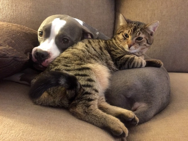 φωτογραφίες Σκύλος Γάτα