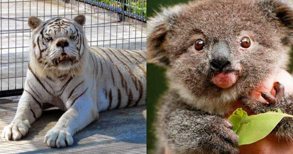 Η Ξεχωριστή Ομορφιά των Ζώων με Σύνδρομο Down μέσα από 15 Αξιολάτρευτες Φωτογραφίες. Δώστε Προσοχή στο Γαϊδουράκι!