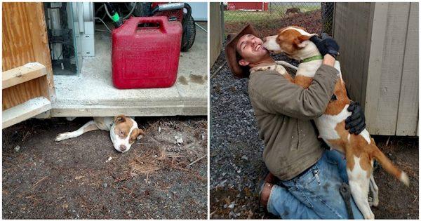 ΕΚΠΛΗΚΤΙΚΟ! Έγκυος Σκυλίτσα δεν Σταματάει να Φιλάει τον Άντρα που την Διέσωσε!