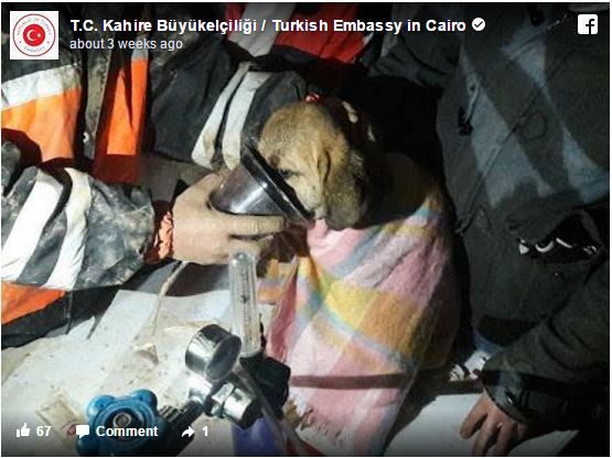 Σκύλος πυροσβέστες διάσωση σκύλων