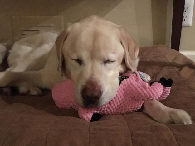 τυφλός σκύλος Σκύλος διάσωση σκύλων