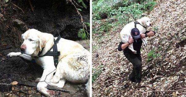 Διασώστες βρίσκουν τυφλό σκυλί σε ένα βουνό, 8 μέρες από όταν εξαφανίστηκε