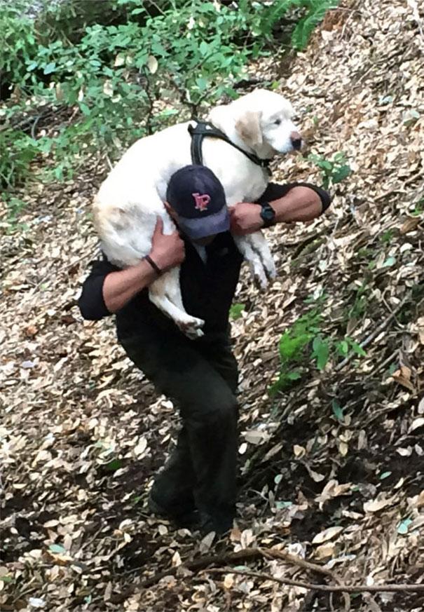 σκύλοι διάσωση σκύλων
