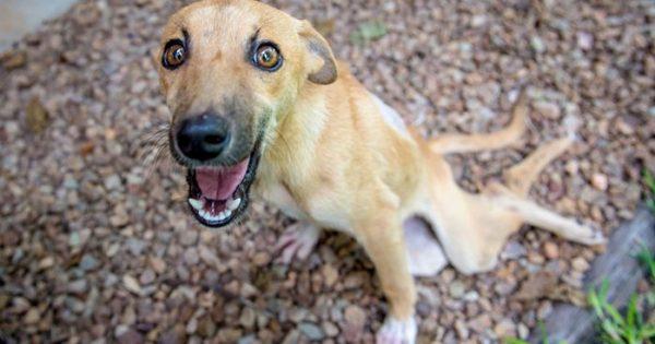Παράλυτη σκυλίτσα σερνόταν για χιλιόμετρα ελπίζοντας ότι κάποιος θα την προσέξει