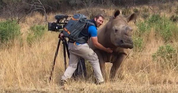 Ρινόκερος πλησιάζει φωτογράφο για να του κάνει χάδια στην κοιλιά